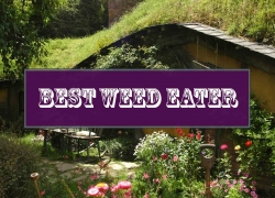 Best Weed Eater Reviews – Buyer's Guide