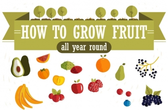 How To Grow Fruit All Year Round