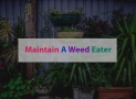How To Maintain A Weed Eater