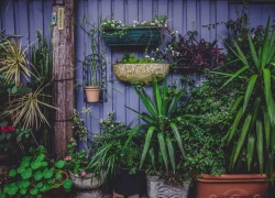 Do Not Let Your Plants Become Unhealthy – Keep Your Garden Fresh