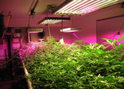 Best LED Grow Lights Reviews 2017 – Buyer's Guide