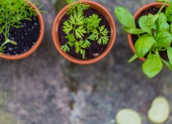 5 Reasons To Plant A Herb Garden